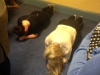 Sharon & Aoife During Plank Challenge